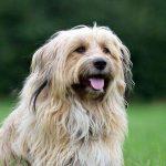shelta Online-Tierheim Fotoaktion: Mischlingshund Paul | © Angela Volkmann
