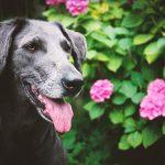 shelta Online-Tierheim Fotoaktion: Mischlingshund Lucy | © Anja Horn