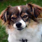 shelta Online-Tierheim Fotoaktion: Mischlingshund Katty | © Anja Krieger