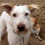 shelta Online-Tierheim Fotoaktion: Mischlingshund Miro | © Anja Linker