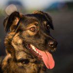 shelta Online-Tierheim Fotoaktion: Mischlingshund Luna | © Annika Watteler