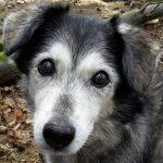 shelta Online-Tierheim Fotoaktion: Mischlingshund Ronja | © Barbara Fitsch