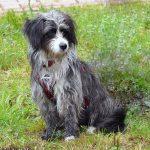 shelta Online-Tierheim Fotoaktion: Mischlingshund Winnie   © Bettina Kunz