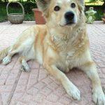 shelta Online-Tierheim Fotoaktion: Mischlingshund Vira | © Bianca Sauerland
