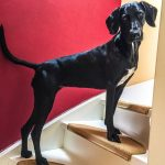 shelta Online-Tierheim Fotoaktion: Mischlingshund Desi | © Birgit Gruber