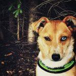 shelta Online-Tierheim Fotoaktion: Mischlingshund Pixie | © Christine Biedermann