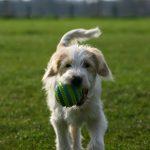 shelta Online-Tierheim Fotoaktion: Mischlingshund Muk | © Claudia Hoge