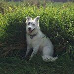 shelta Online-Tierheim Fotoaktion: Mischlingshund Fräulein Smilla | © Claudia Johannsmeier