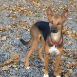 shelta Online-Tierheim Fotoaktion: Mischlingshund Lara | © Claudia Krekelaar
