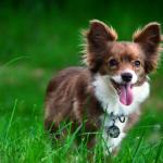 shelta Online-Tierheim Fotoaktion: Mischlingshund Liisa | © Claudia Sterzel