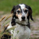 shelta Online-Tierheim Fotoaktion: Mischlingshund Jackie | © Dagmar Bergen