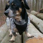 shelta Online-Tierheim Fotoaktion: Mischlingshund Tyson | © Darinca Grunert