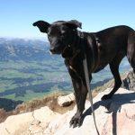 shelta Online-Tierheim Fotoaktion: Mischlingshund Mora | © Ellen Henkel