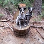 shelta Online-Tierheim Fotoaktion: Mischlingshunde Sarah und Lara | © Gritt Elvermann