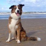 shelta Online-Tierheim Fotoaktion: Mischlingshund Louie | © Heike Belz