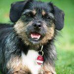 shelta Online-Tierheim Fotoaktion: Mischlingshund Abby | © Ilona Chouay