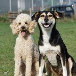 shelta Online-Tierheim Fotoaktion: Mischlingshund Lilly-Fee | © Ilse Maaß