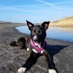 shelta Online-Tierheim Fotoaktion: Mischlingshund Lilo | © Isabel Weismüller