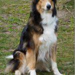 shelta Online-Tierheim Fotoaktion_ Mischlingshund Nala | © Ivonne Horbert