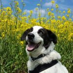 shelta Online-Tierheim Fotoaktion: Mischlingshund Emil | © Janina Nowak