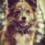 shelta Online-Tierheim Fotoaktion: Mischlingshund Kiko| © Jasmin Löb