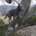 shelta Online-Tierheim Fotoaktion: Mischlingshund Lucky | © Jennifer Nickel