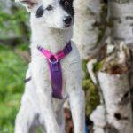 shelta Online-Tierheim Fotoaktion: Mischlingshund Phoebe | © Jutta Friedrich