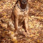 shelta Online-Tierheim Fotoaktion: Mischlingshund Lennox | © Karin Münch