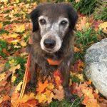 shelta Online-Tierheim Fotoaktion: Mischlingshund Die Lucky | © Karin Strobel