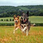 shelta Online-Tierheim Fotoaktion: Mischlingshunde Anyou und Paula | © Kathrin Hofmann