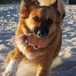 shelta Online-Tierheim Fotoaktion: Mischlingshund Pico | © Lars Piefke