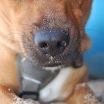 shelta Online-Tierheim Fotoaktion: Mischlingshund Tiero | © Mareike Szalata