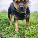 shelta Online-Tierheim Fotoaktion: Mischlingshund Michl | © Margit Haynl