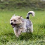 shelta Online-Tierheim Fotoaktion: Mischlingshund Jakob | © Margit Haynl