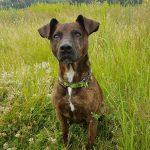 shelta Online-Tierheim Fotoaktion: Mischlingshund Ramino | © Melanie Jerosch