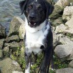 shelta Online-Tierheim Fotoaktion: Mischlingshund Jakob | © Michaela Angene