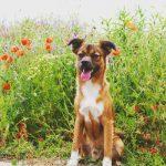 shelta Online-Tierheim Fotoaktion: Mischlingshund Sam | © Michaela Bräuer