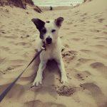 shelta Online-Tierheim Fotoaktion: Mischlingshund Tammy | © Miriam Große-Deckers