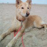 shelta Online-Tierheim Fotoaktion: Mischlingshund Sunny | © Tanja Vandenhirtz