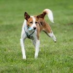 shelta Online-Tierheim Fotoaktion: Mischlingshund Paula | © Nathalie Buck