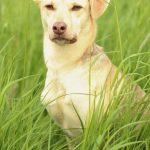 shelta Online-Tierheim Fotoaktion: Mischlingshund | © Nathalie Neuhaus