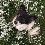 shelta Online-Tierheim Fotoaktion: Mischlingshund Curly | © Ramona Rolf