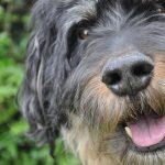 shelta Online-Tierheim Fotoaktion: Mischlingshund Teddy | © Sabine Jährling