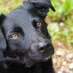 shelta Online-Tierheim Fotoaktion: Mischlingshund Miro | © Sabine Röthlein