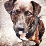 shelta Online-Tierheim Fotoaktion: Mischlingshund Peppi | © Sabrina Janssen