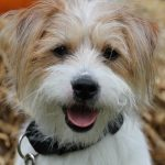 shelta Online-Tierheim Fotoaktion: Mischlingshund Milow | © Sandra Jung