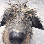 shelta Online-Tierheim Fotoaktion: Mischlingshund Ipa | © Sascha Brück