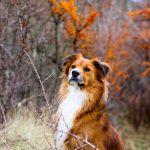 shelta Online-Tierheim Fotoaktion: Mischlingshund Lucas | © Stefanie Send