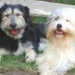 shelta Online-Tierheim Fotoaktion: Mischlingshunde Wilma und Muffin | © Steffi Kindermann