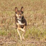 shelta Online-Tierheim Fotoaktion: Mischlingshund Yahto | © Susann Stiller
